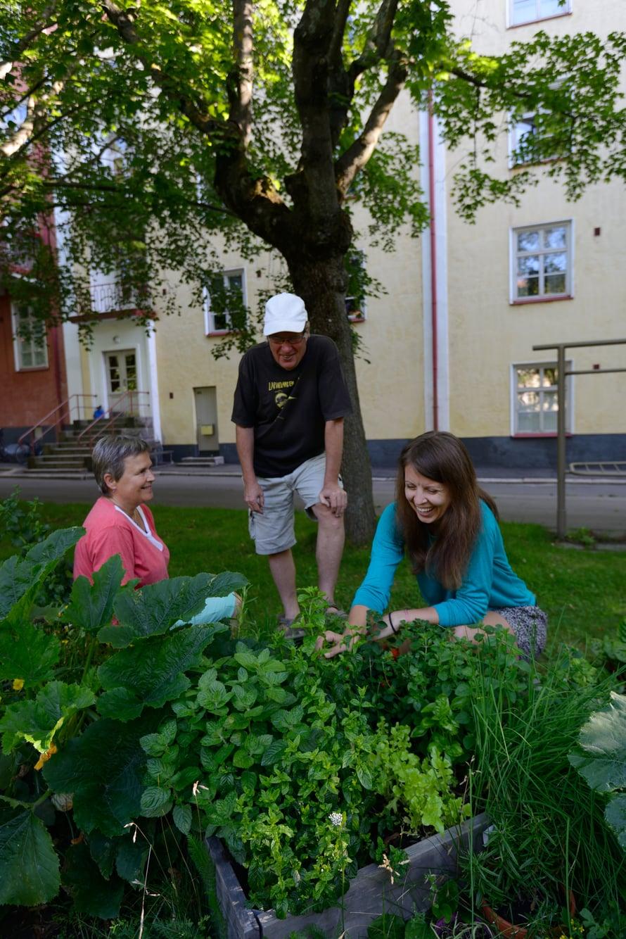 """Naapurit Arja Saaristo ja Harri Ahola ihastelevat Pamelan kurpitsasatoa. """"Mutta greippimintusta saat tehdä saippuaa"""", Arja kiusoittelee. """"Siitä tulee hyvää salaattia"""", Pamela vakuuttaa."""