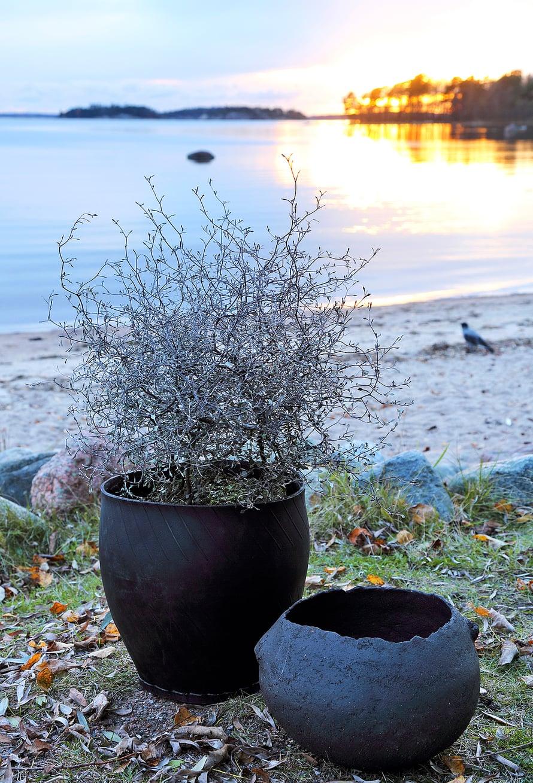 Korokian graafinen olemus kiehtoo. Istuta kasvi yksin, jolloin sen luonne tulee parhaiten esille. Ruukkuna on vanhoista autonrenkaista tehty kori ja sen seurana Anna Hackmanin tekemä uniikki keramiikkamalja.