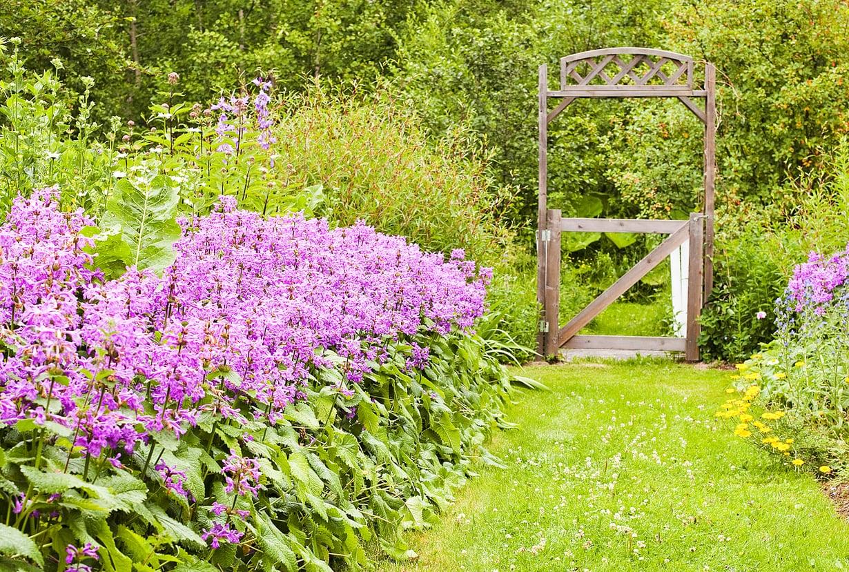 Nurmialueelle sopii hunajalta tuoksuva valkoapilanurmi, joka kutsuu paikalle pölyttäviä hyönteisiä. Käytävän reunakasvina kasvaa violettia jalopähkämöä.