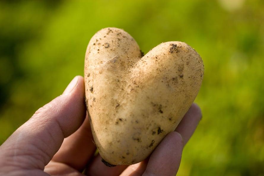 Sydämellisiä terveisiä perunapellolta!