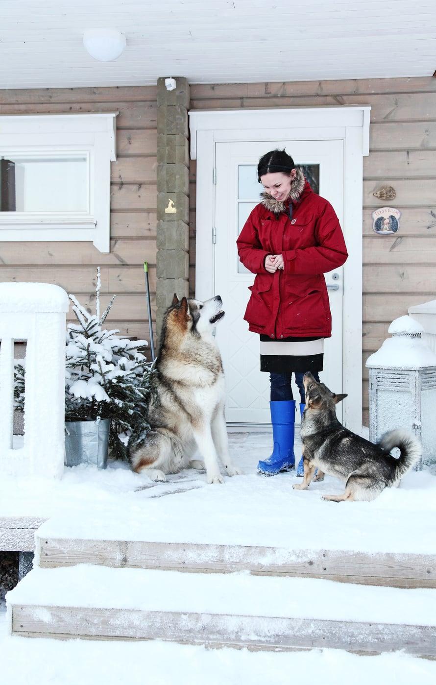 Tarja Leponiemi, alaskanmalamuutti Juri ja länsigöötanmaanpystykorva Helmi nauttivat talvesta.