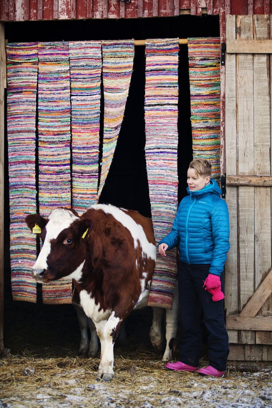 Nautalauman pomo Jennifer muutti Tuulispäähän 50 lehmän parsinavetasta. Se oli joutumassa teuraaksi, koska se oli liian pieni siemennettäväksi.