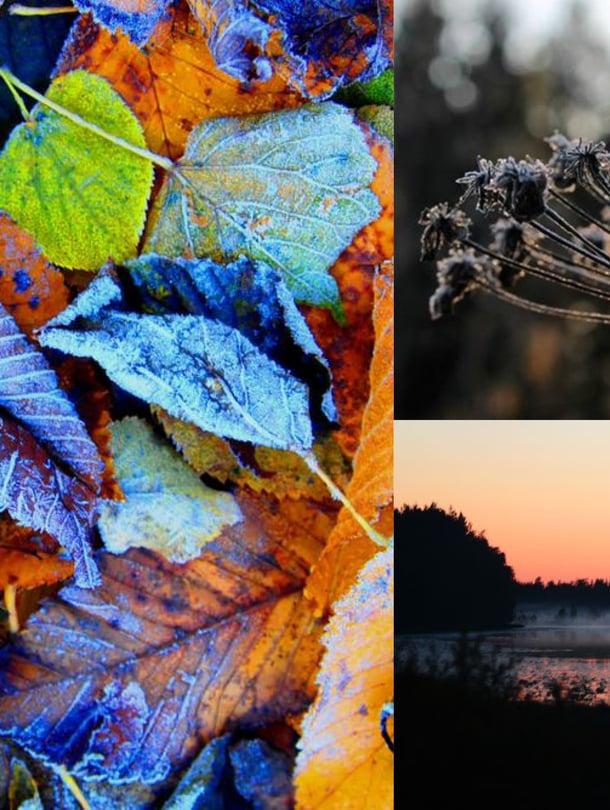 Kuivunutkin on kaunista! Lokakuu tuo luontoon uuden väripaletin.