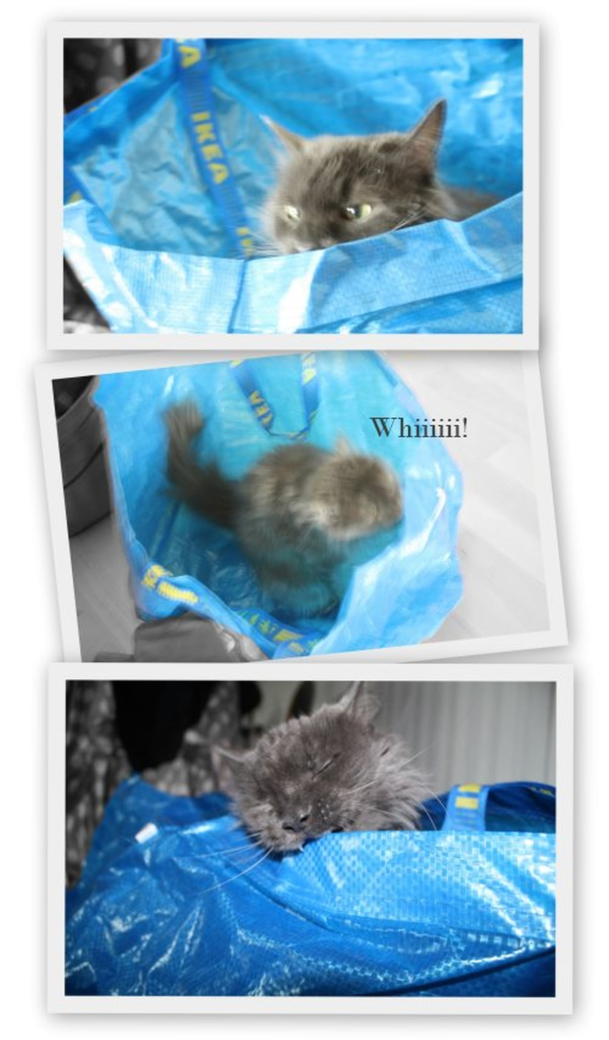 nöpö kissa