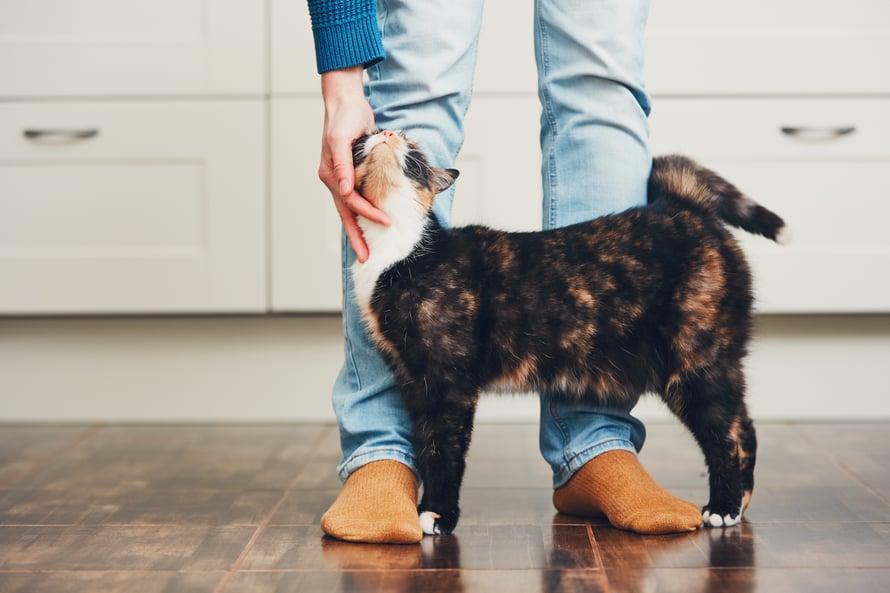 """""""Tää on mun"""", sanoo kissa."""
