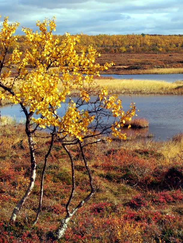 Kevät on harmaa ja hailakka, syksy on keltainen, punainen, ruskea, vihreä ja oranssi, syysihmiset tietävät.