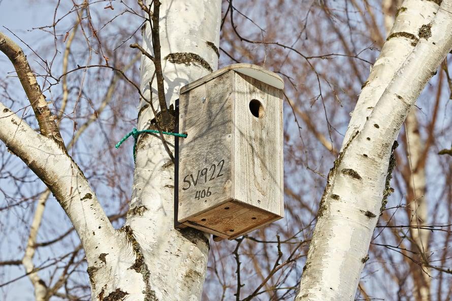 Urpo Koponen huoltaa linnunpönttöjään säännöllisesti.