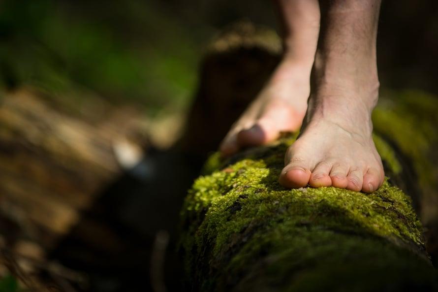 Sammal on pehmeää jalan alla – ja nurmikon leikkaamiseltakin säästyy!