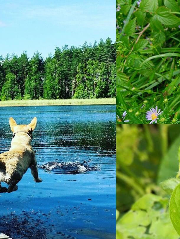 Kesä on täynnä nautintoja ja kauneutta! Ah, pakahduttavan ihanaa!