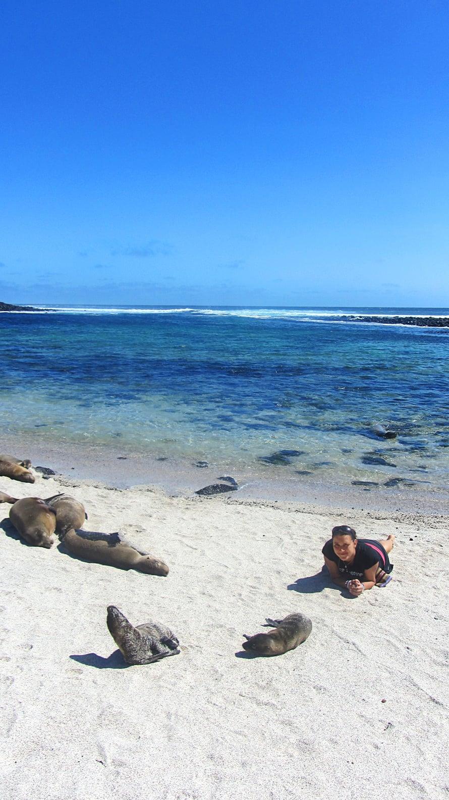 Merileijonat ottavat aurinkoa La Loberían rannalla San Cristóbalin saarella Galapagoksella.