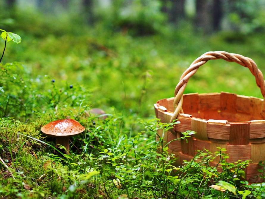 Metsästäjän vietit heräävät syksyllä. Kohteet ovat pieniä ja matalia.