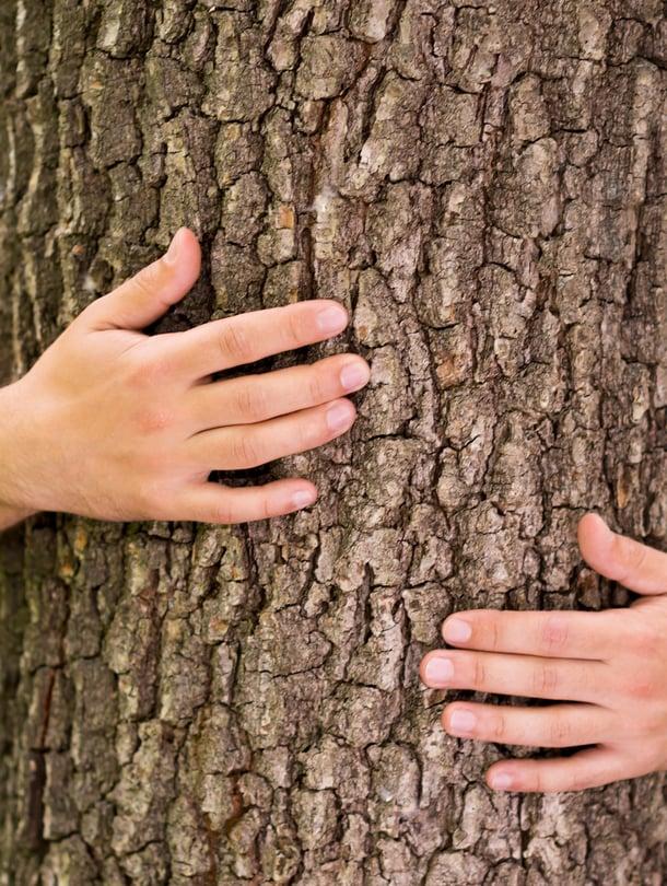 Kun halaa puuta, on vaikea mokata.