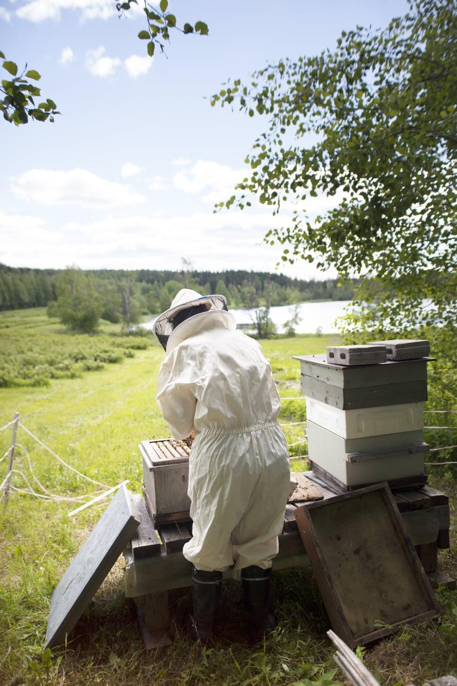 Pesät ovat yksilöllisiä. Kaikissa mehiläiset eivät siivoa yhtä ahkerasti, sen näkee talven jälkeen jätöksistä pesän pohjalla.