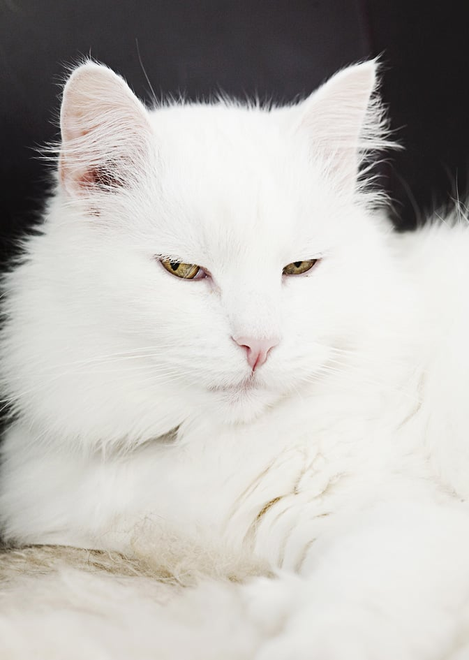 Omistaja muutti pois ja jätti kissan entiseen asuntoon. Kun poliisit löysivät sen, kissa oli juonut vessanpytynkin kuivaksi.