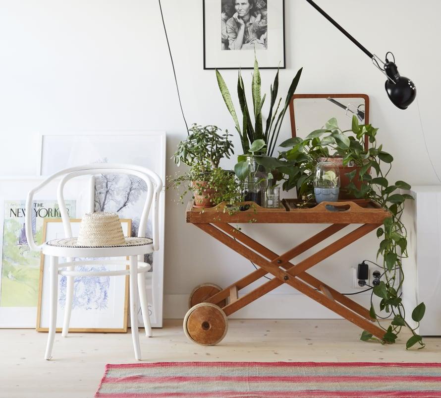 Kasvihyllyillä saa hauskaa piristystä sisustukseen. Kuva Piia Arnould
