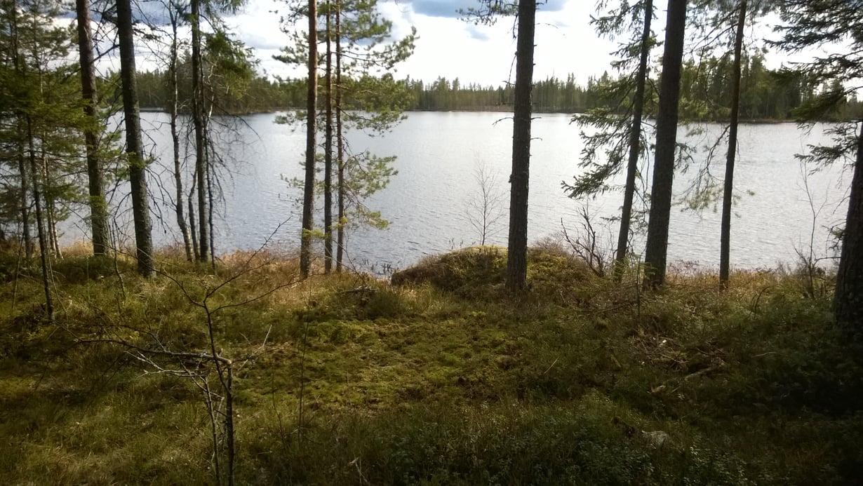 Telttasaunan paikka on lammen rannassa: uimaan vain muutama harppaus.