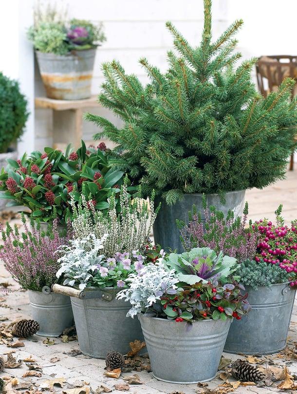 Ämpäreihin istutetut värikkäät syyskasvit pidentävät puutarhakautta.