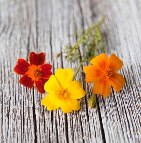 Samettikukat kestävät hyvin myös lämpimien ruokien koristeina.