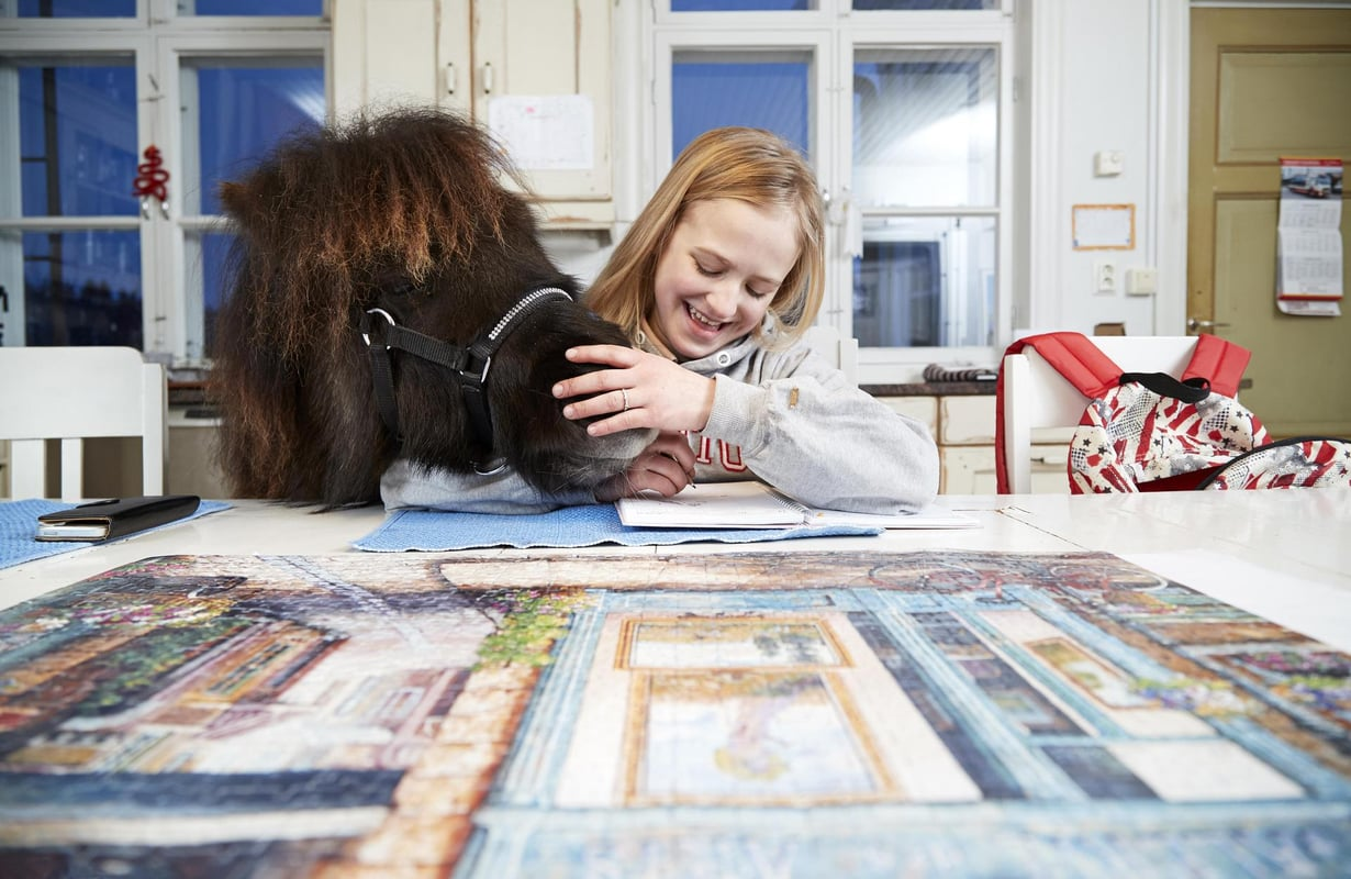 """Kun silmä välttää, Alfons järsii pöytäliinaa. """"Yleensä saan ottaa ponin sisälle, kun lupaan siivota muutaman ylimääräisen karsinan. Isää pitää taivutella enemmän kuin äitiä"""", Patricia sanoo."""