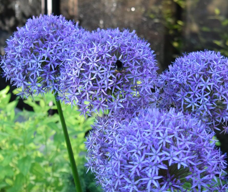 Jos joku tietää mikä kukka, niin kerro mullekin! Tosi kaunis mutta vieras mulle.