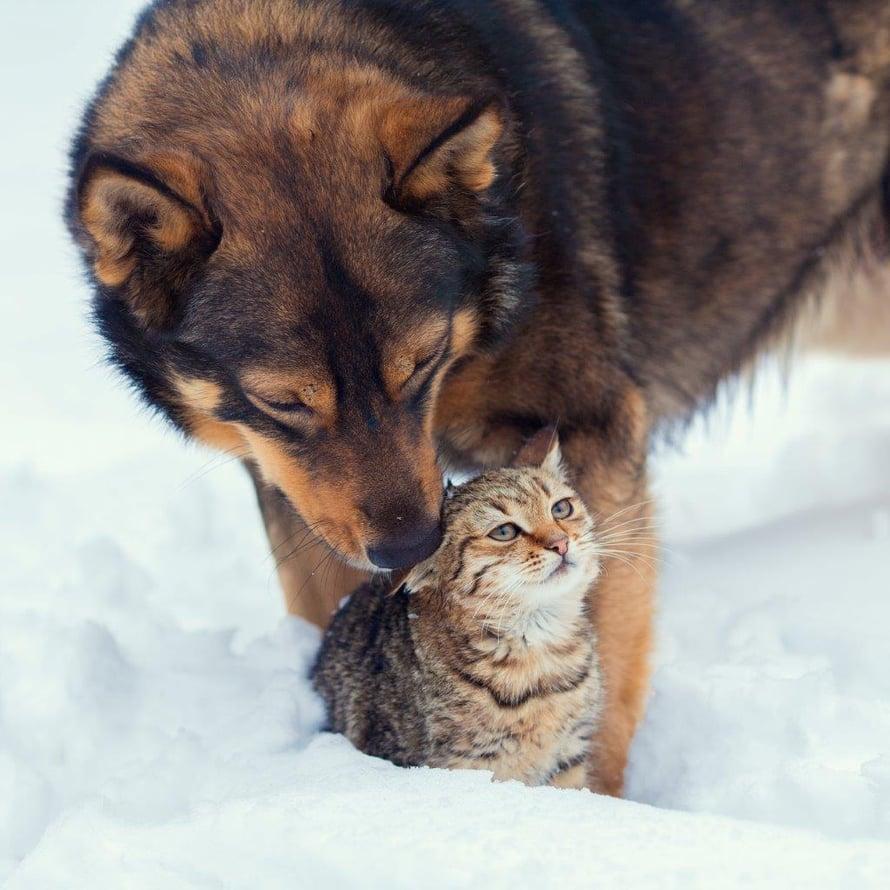 Lohtua ja voimaa ystävälle talven pimeimpänä aikana.
