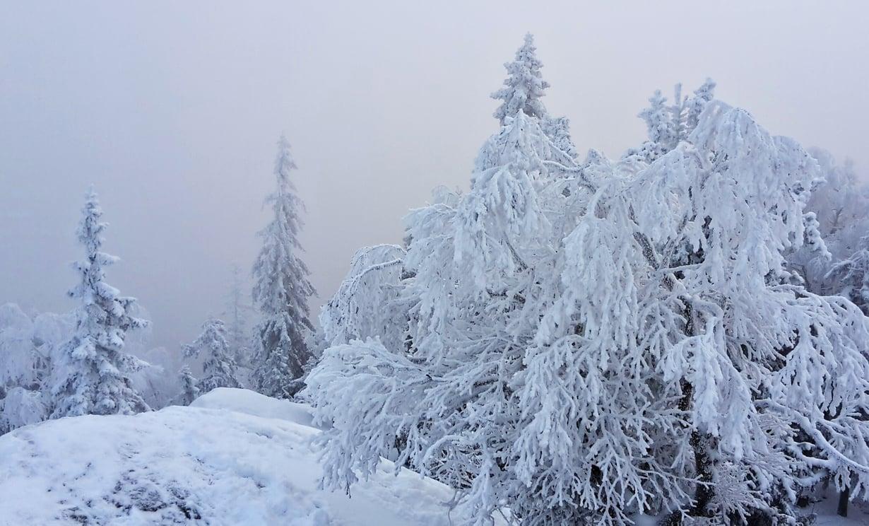 Minna Issakainen otti puuterisen kuvan Ukko-Kolin aamusta.