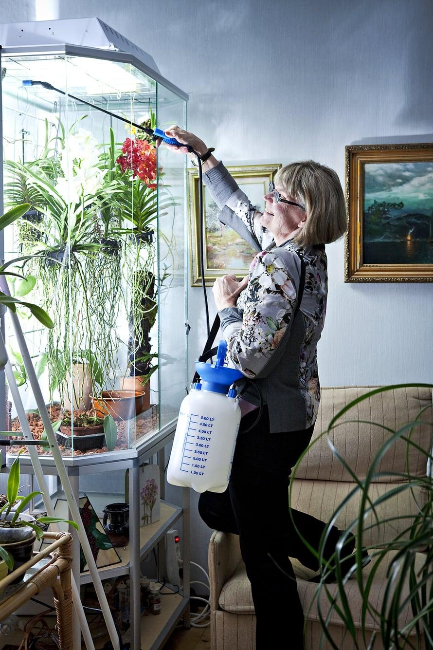 Oili sumuttaa lasikossa kasvavien orkideoiden juuria kerran viikossa.