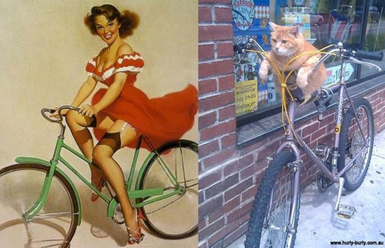 cats-that-look-like-pin-up-girls-08