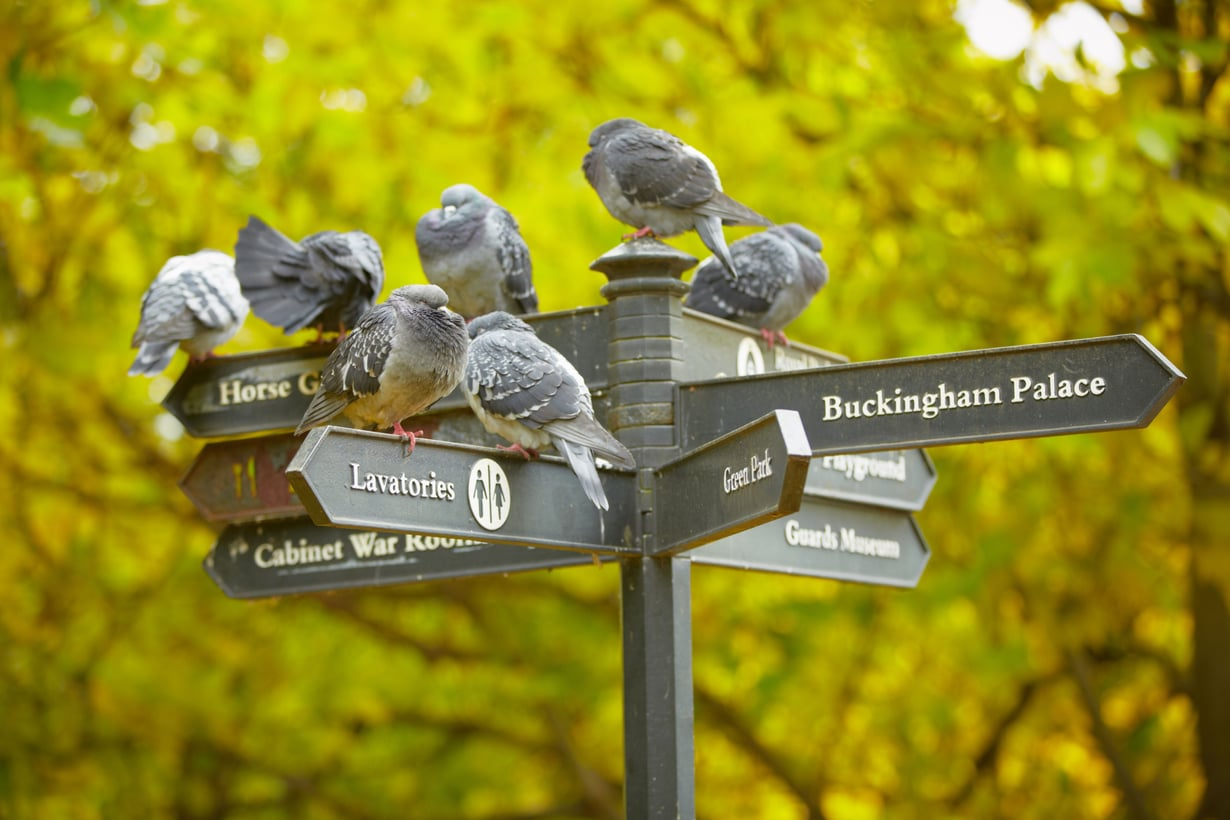 Puistossakin kannattaa Lontoon-matkalla poiketa. Mitä pidemmälle kevät etenee, sitä kivempaa siellä on viettää vaikka piknikkiä!
