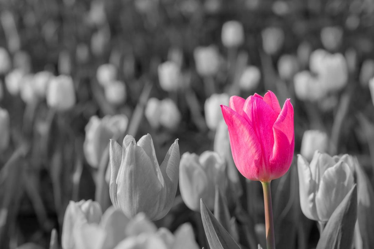 Värit palaavat, kun saa hengitellä hetken yksin, kertoo Kodin Kuvalehden lukija.