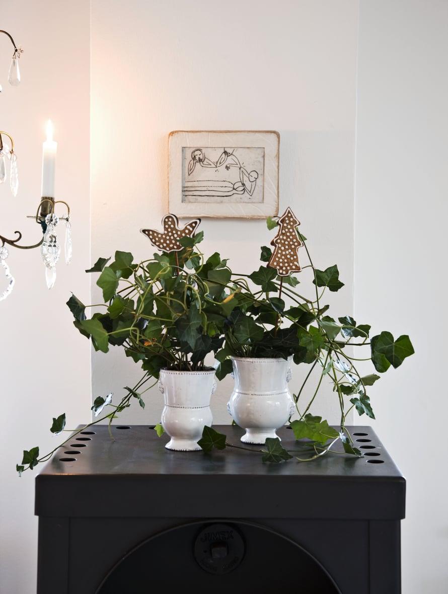 Simsalabim! Muratti muuttui huonekasvista joulupuuksi. Jos et malta laittaa piparinekkuja koristeeksi, syö ne.