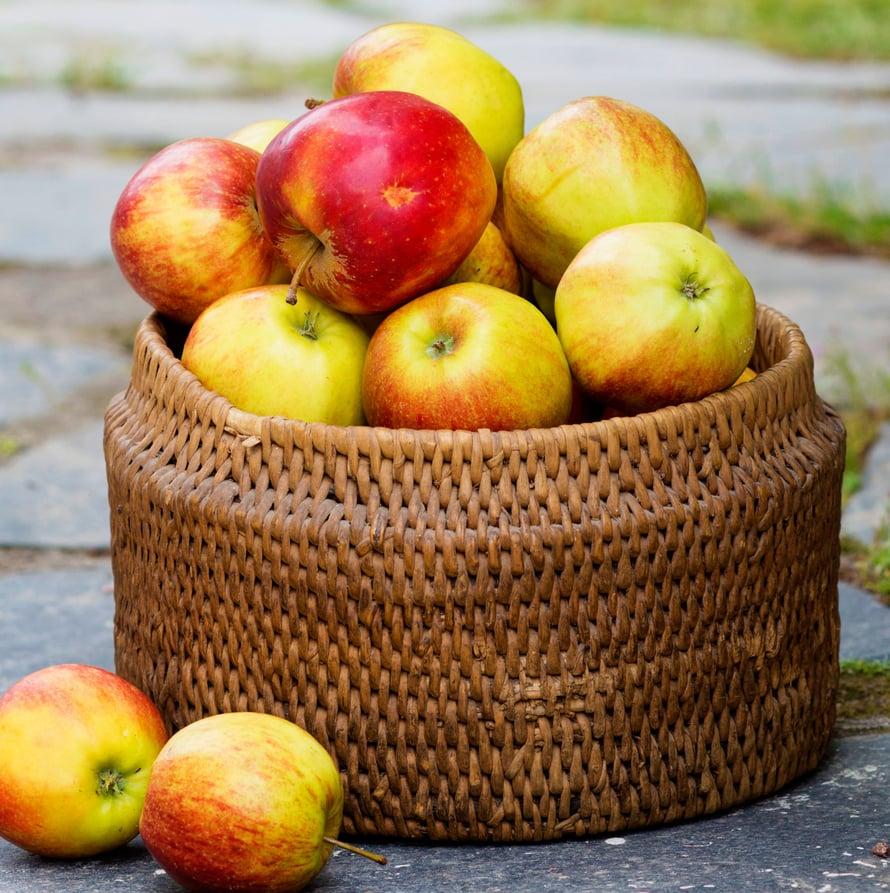 Kun puut notkuvat omenoista, on aika tehdä hilloa.