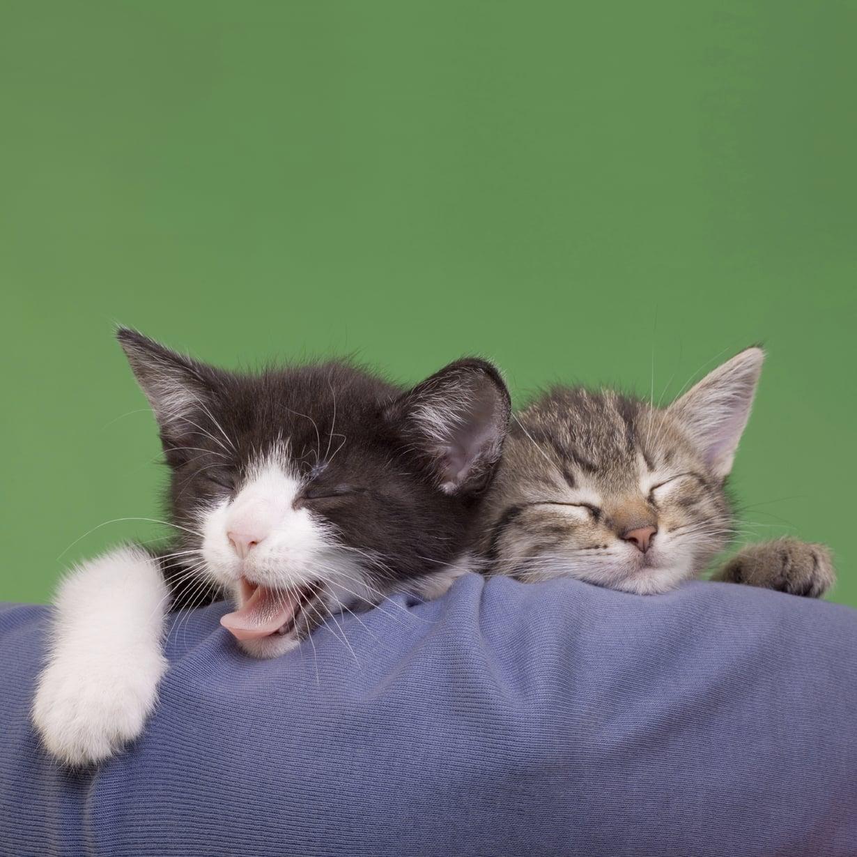 Turha tuntea syyllisyyttä siitä, jos nukuttaa!