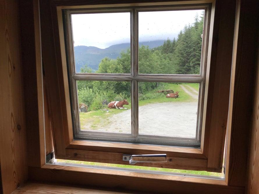 Mies äkkäsi kahvion vessan ikkunasta lehmänäkymän.