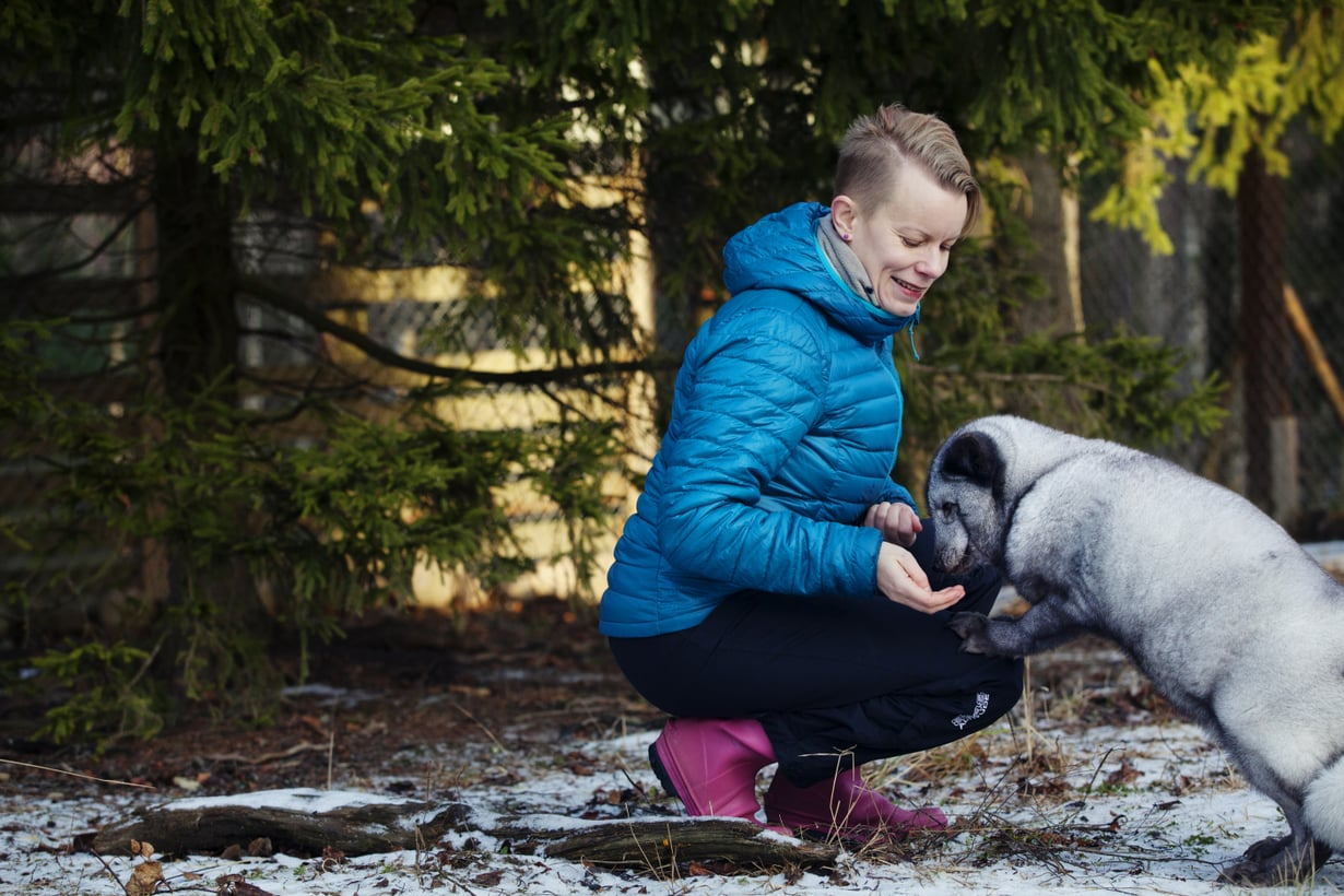 Sinikettu Otto asuu Eläinsuojelukeskus Tuulispäässä, jossa Mia Takula on käynyt vapaaehtoistöissä. Otto löytyi pyörimästä teollisuusalueelta ja otettiin kiinni poliisin luvalla. Otto lienee tarhakarkulainen, sillä sen jalat ovat vääntyneet, niin kuin häkissä kasvaneille ketuille voi käydä.