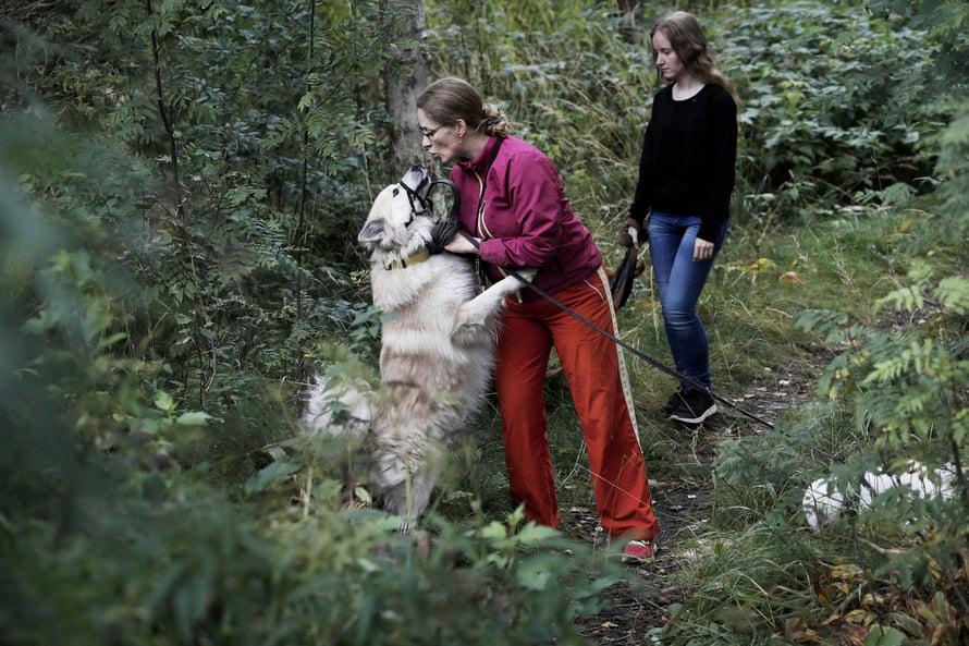 """""""Koirien kanssa metsässä kulkeminen palauttaa nopeammin kuin mikään muu"""", Salina sanoo. Toivo tervehtii Salinaa, lenkkiseurana Olivia."""