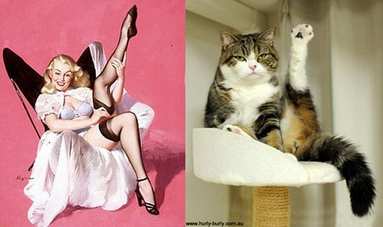 cats-that-look-like-pin-up-girls-02