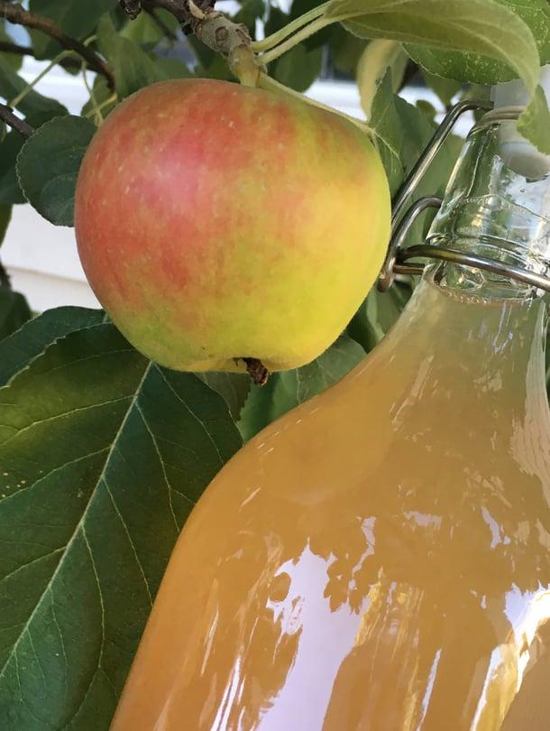 Omenalajike ja omenien kypsyysaste vaikuttavat mehun makeuteen ja määrään.