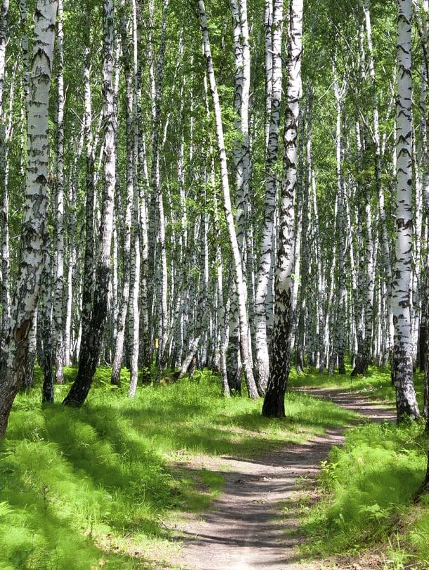 Helppo tapa vähentää stressiä: mene metsään