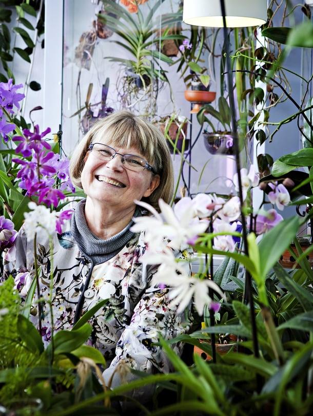 Oili Pentinsaari on eläkkeellä oleva it-alan yrittäjä, joka asuu vanhassa puutalossa Espoossa ja toimittaa Suomen Orkideayhdistyksen lehteä.