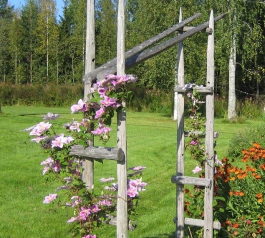 """""""Kärhöt kiipeilevät vanhoista heinäseipäistä rakennettua porttia pitkin."""" Riitta Kolehmainen, Siilinjärvi"""