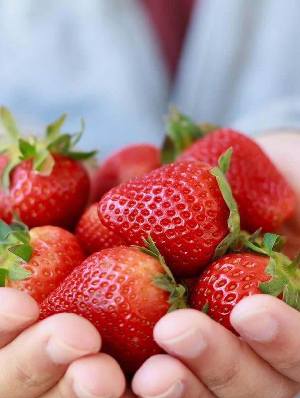 Ne ovat oikeasti hedelmiä. Pohjushedelmiä.