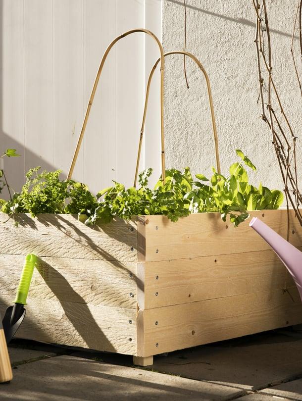 Lehtivihannekset, kuten salaatti ja pinaatti, viihtyvät hyvin viljelylaatikossa.