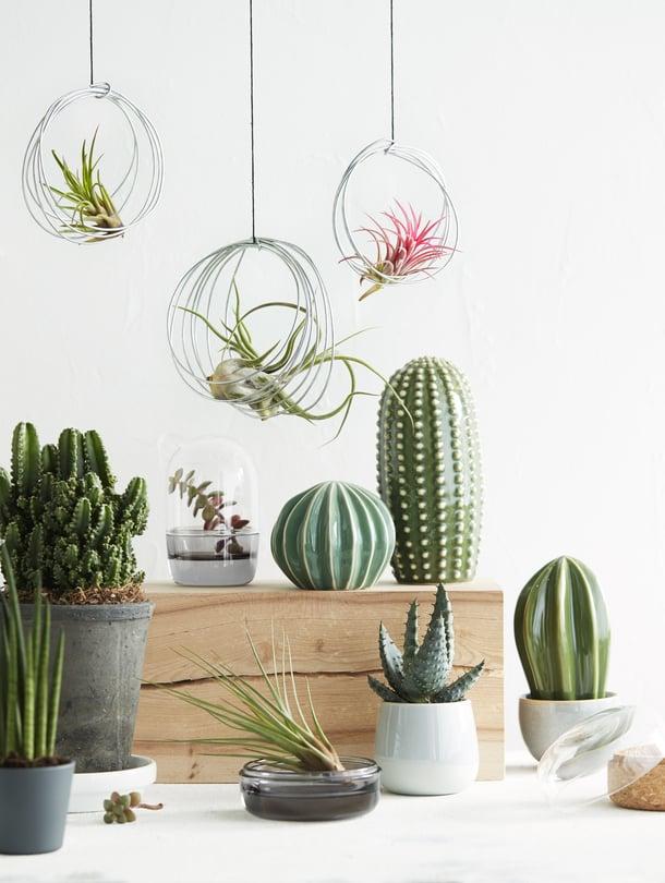 Laiskan kastelijan keidas! Kaunis asetelma syntyy ilmakasveista sekä elävistä ja keraamisista kaktuksista. Tämän helppohoitoisempaa kotipuutarhaa et löydä.