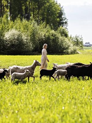 Veera Hongisto, 29, työskentelee pörssiyhtiön viestinnän asiantuntijana ja asuu muusikkomiehensä Sakari Tuomolan kanssa sukutilalla Huittisissa. Pariskunta pyörittää Ihantolan lammastilaa, joka tuottaa karitsanlihaa sekä taljoa.