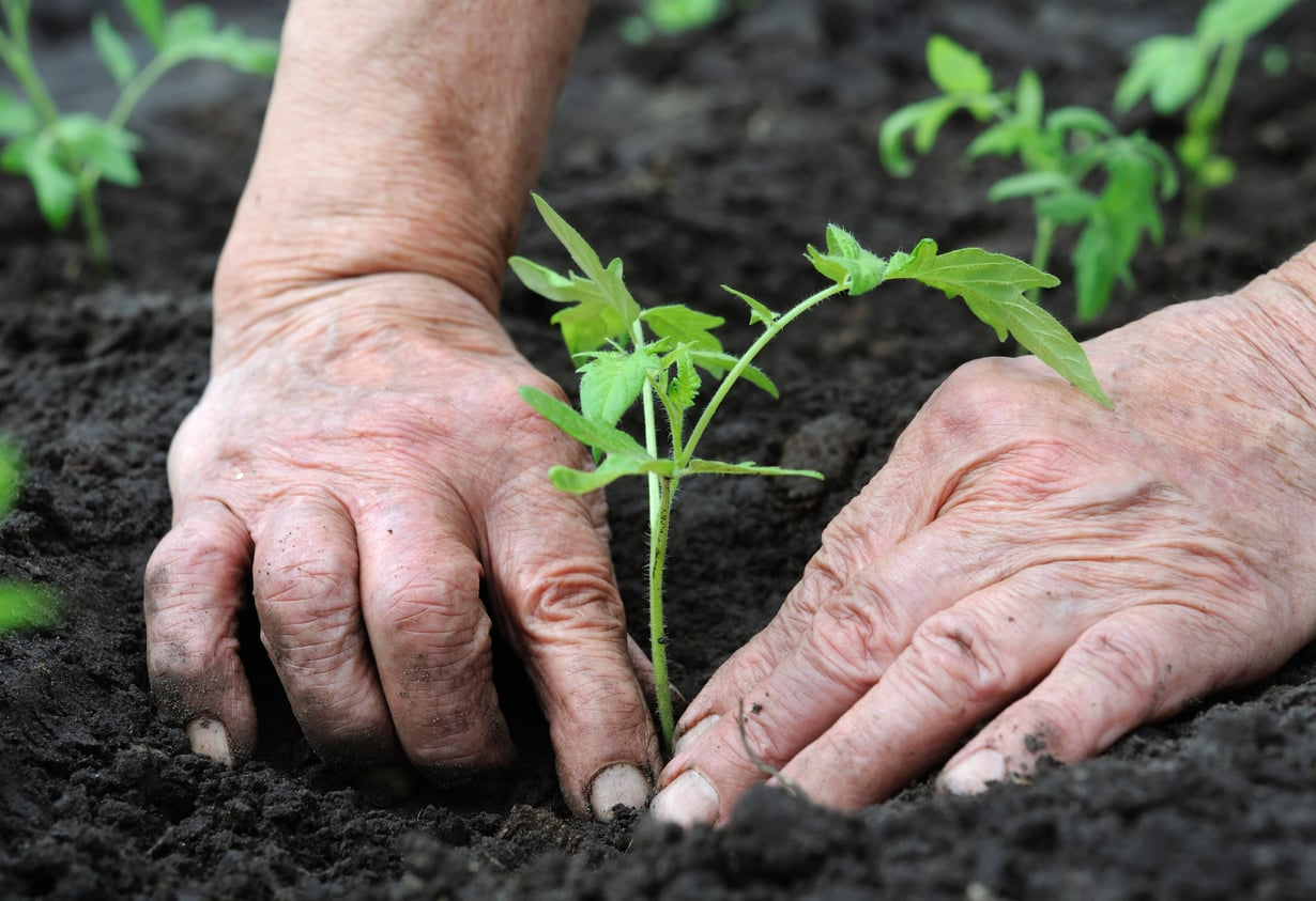 Tutkimusten mukaan kasvien kanssa puuhastelu parantaa mielialaa jo viiden minuutin jälkeen.