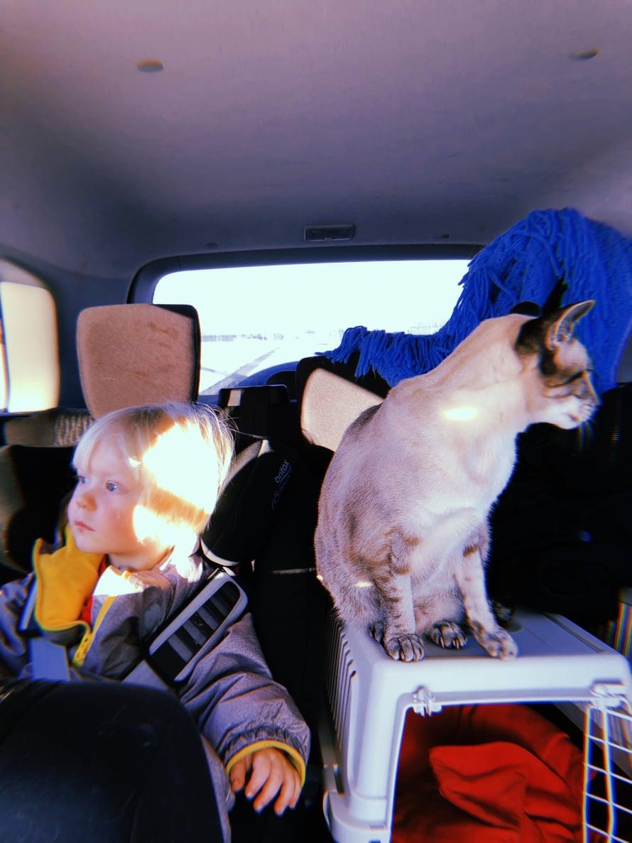 Välillä reissaminen on tällaista: vanhempi kissamme Rambo vetää toisinaan automatkoilla diivaraivarit kopissaan ja leppyy vasta kun annamme hänen matkustaa hetken kopin ulkopuolella.