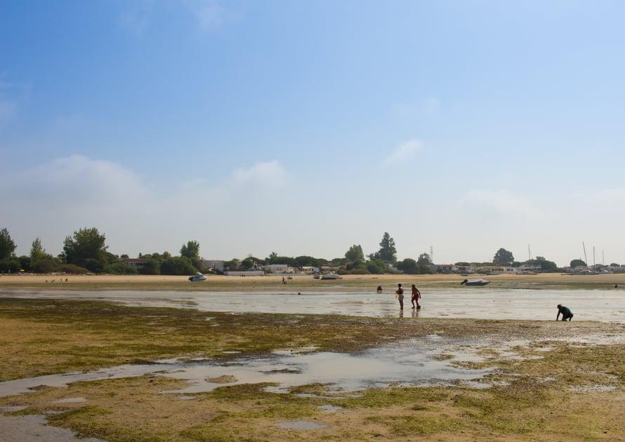 Laskuveden aika tuo rannalle simpukoiden kerääjät.