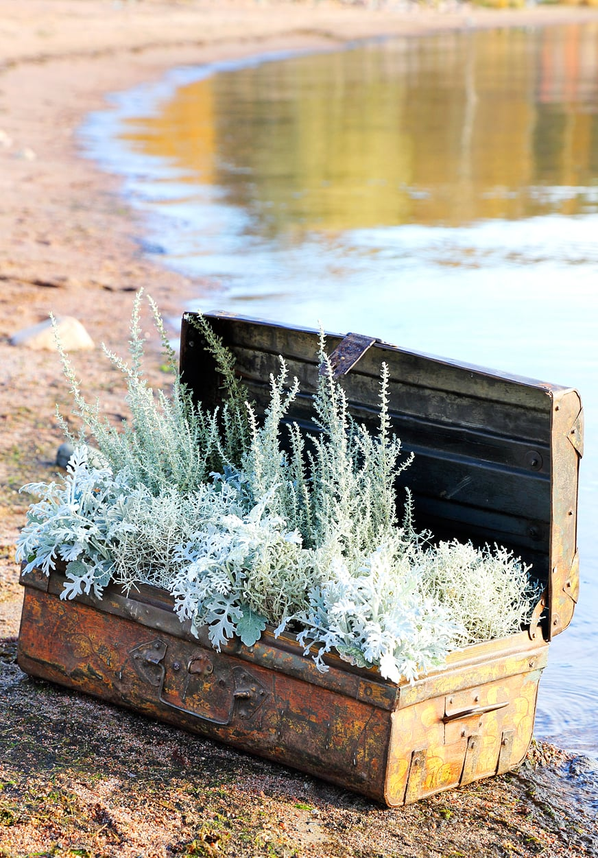 Metallisessa matka-arkussa on hopeanhohtoisten kasvien ihailijalle aarre: curry-yrttiä, hopealankaa ja hopealehteä. Hopeasävyinen istutus näkyy syksyn hämärtyvissä illoissakin.