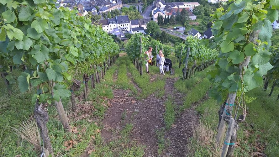Innostuimme oikaisemaan viinirinnettä ylös kera lastenvaunujen.